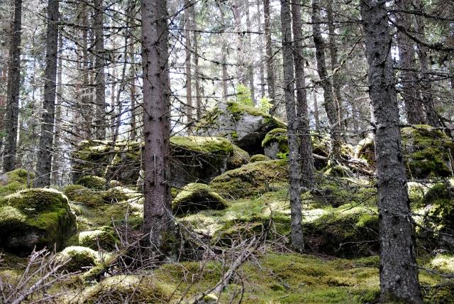 Skogsgruppen