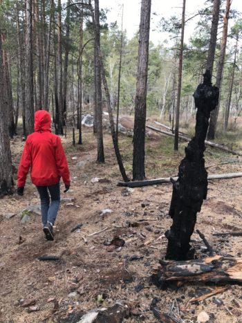 Person fotad bakifrån gåendes förbi brandskadade träd